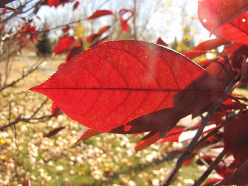 Foliage #1