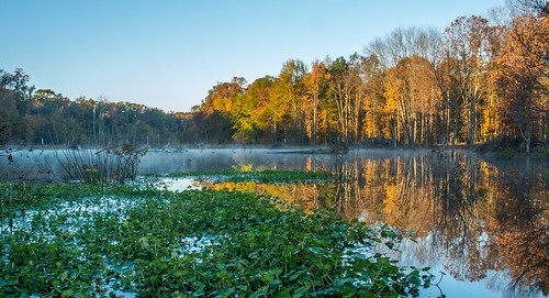 Early Morning in the Wetlands by Geoff Livingston