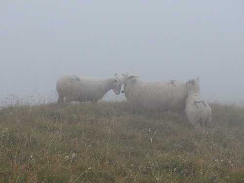 Sheep in the fog @ Hike to Mont Charvin