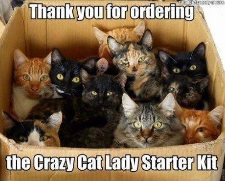 Thank You For Ordering The Crazy Cat Lady Starter Kit...