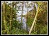 Rufford Lake 3