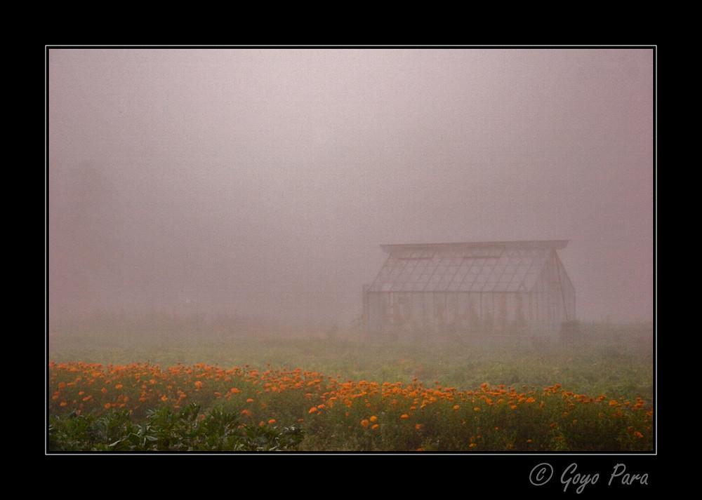 Bajo la niebla antes del amanecer