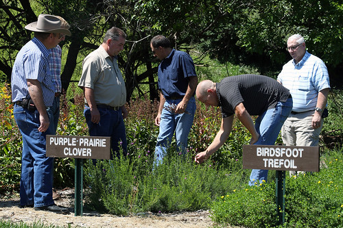 A resource specialist with NRCS discusses features of the purple prairie clover planted in the plant material plots. USDA photo.