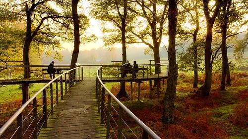 nature netherlands landscape veluwezoom posbank