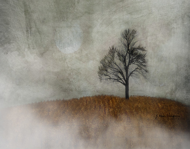 jamie heiden - What the Moon Saw