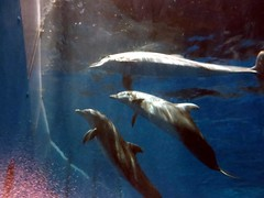 Could the dolphins be watching humans?