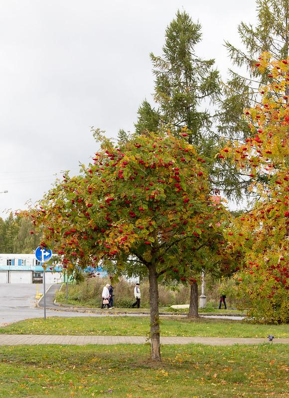2014-09-27-12-51-01-Петрозаводск-048