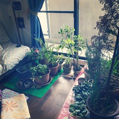 we brought in the plants and hubs swept the lanai (thanks hubs) we're ready for typhoon #vongfong #japan #osaka stay safe everyone!