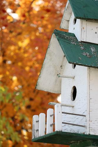 Autumn at the Bird Mansion (SOTC 129/365)