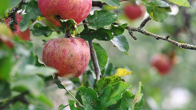 Autumn's bounty