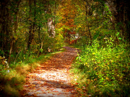 autumn trees fall nature leaves sunshine forest canon walking outside outdoors october colorful solitude alone quiet silent gbrearview hiking thinking suburb paths further wandering intothewoods gapersblock wbez deeper pathways 2014 meandering chicagoist evanstonillinois perkinswoods parkdistrict seekingserenity beautifulmothernature reneerendlerkaplan canonpowershotsx40hs grantandewingstreets hopefullycomingoutagain