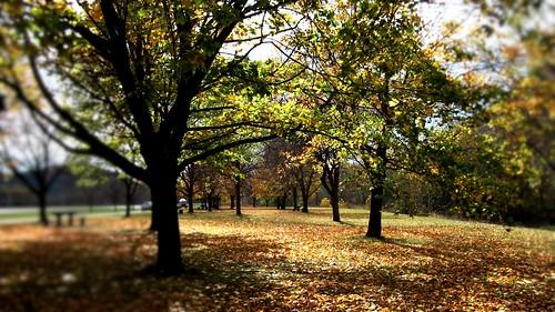 ny fall nature fallcolors upstate foliage schohariecounty