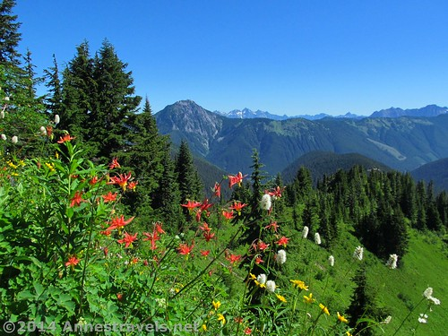 Wildflowers on Canyon Ridge, with the Canadian Cascades beyond...the boundary runs along the nearby hills. Canyon Ridge Trail, Mt. Baker-Snoqualmie National Forest, Washington