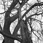 The Test Tree on Xpan
