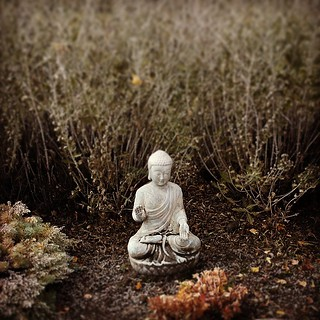 tiny buddha ...  #yyc #buddha #tinybuddha #zen #peaceful #meditation #fall #autumn #garden #walk