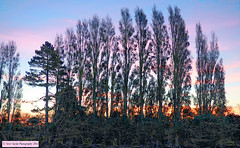Scratchy Bushes and Sunset Trees