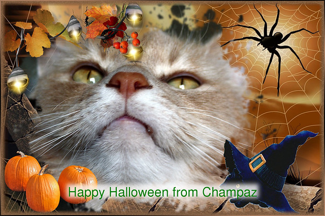 Happy Halloween From Champaz... 31/10/2014..