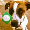 Fanny pup found a sticker. Yay!