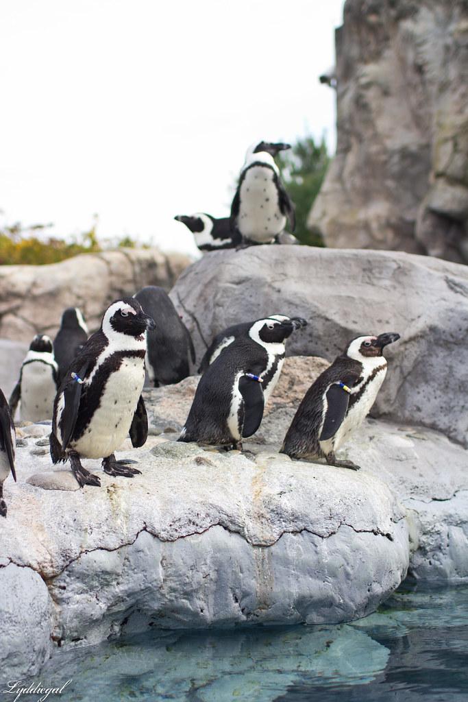 penguins-1.jpg