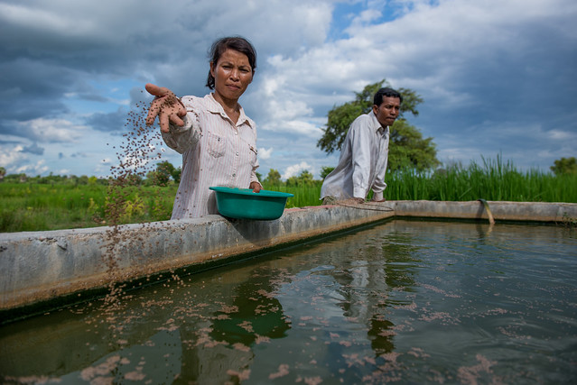 A woman feeds her catfish in Stung Treng, Cambodia. Photo by Sylyvann Borei.