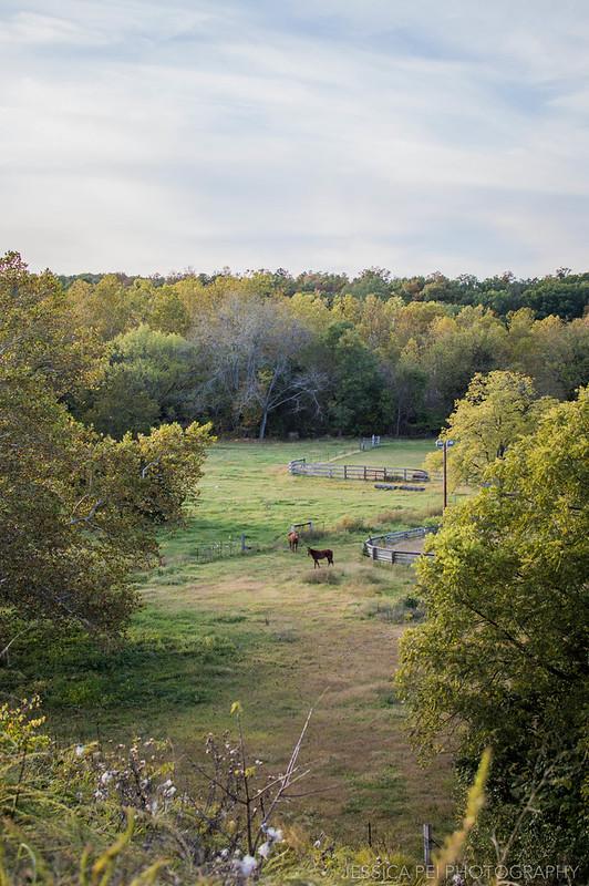 horses pasture