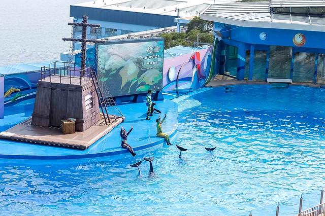 Hongkong ocean adventure dolphins