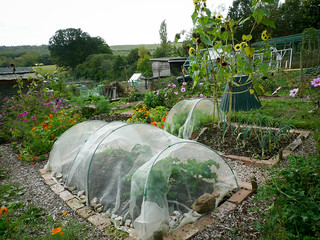 Allotment - 5th Oct