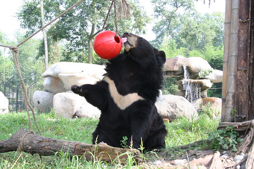 Jasper at our Chengdu sanctuary