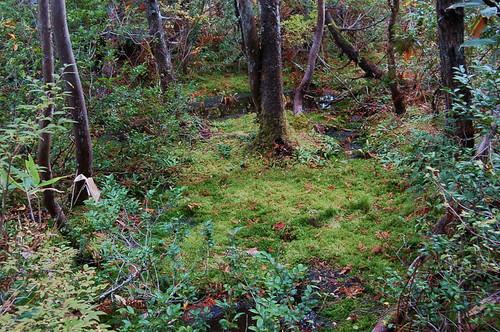 原生林の小径