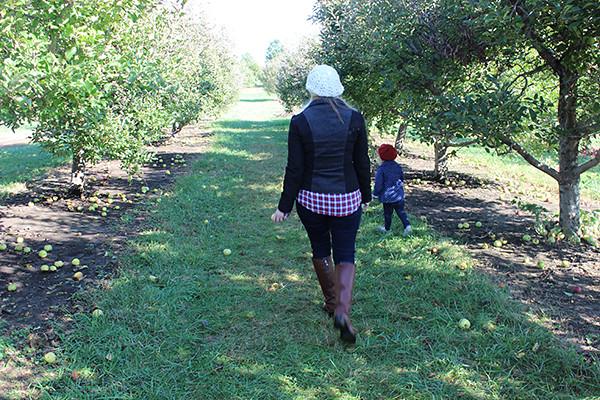 apple-picking 043