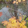 The Creek in the Fall #Oakville