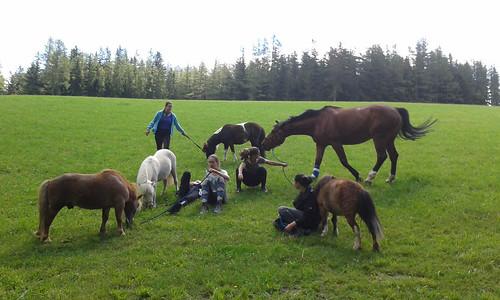Pferdespaziergang mit Grassnack beim Ponyhof