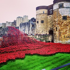 More poppies at the Tower of London