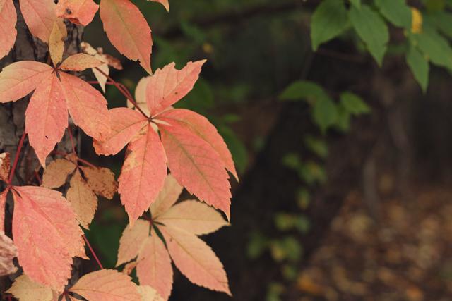 autumn_12
