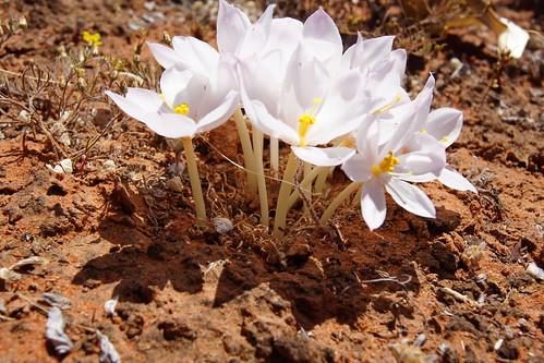 К сожалению, не знаю названия этих дивных белых цветочков с белыми стеблями и тонким сильным ароматом