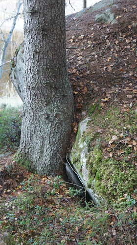 tree stone forest suomi finland sony snapshot trail puu virrat kivi metsä luontopolku nex3 näpsy