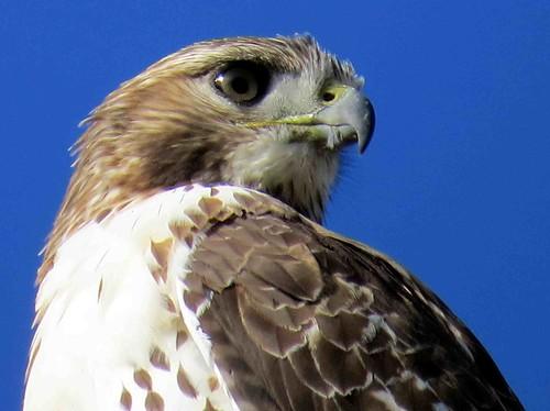 Birding Destinations Duluth