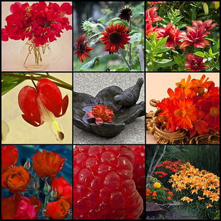 Photo Collage Of Oranges & Reds