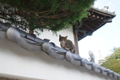 Cat in Enmeiji