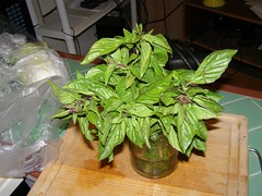 vegetable(0.0), flower(0.0), produce(0.0), food(0.0), leaf(1.0), plant(1.0), herb(1.0), basil(1.0),