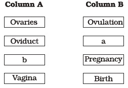 Class 12 Important Questions For Biology Human Reproduction