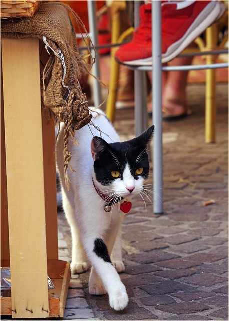 yet another Sorrento cat