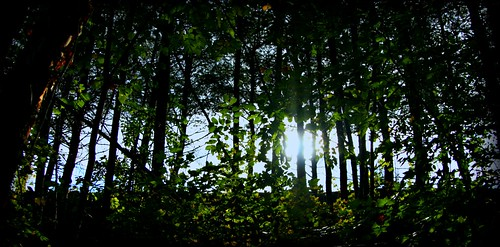 trees forest dante ladivinacommedia suwaneecreekgreenway
