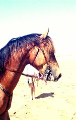Love this fine Moroccan horse we met on Essaouira beach. Those legs belong to my boyfriend Stuart.