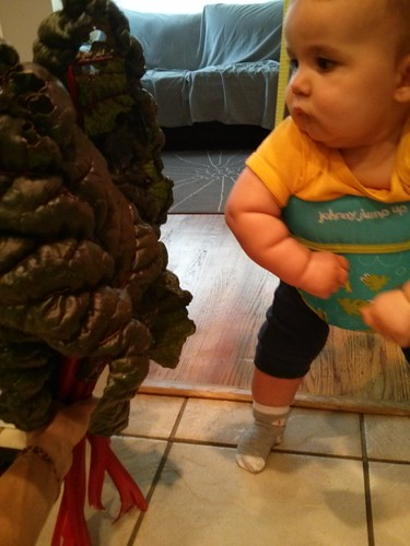 The chard is as big as Willem.