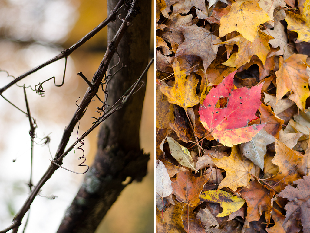 peak foliage collage