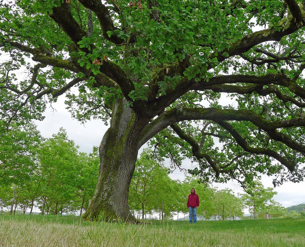 Querce caducifoglie - Pollino, Guide, Hiking, Farm ...
