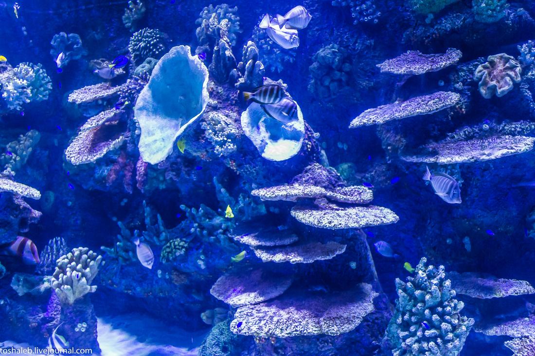 Анталья_аквариум-12