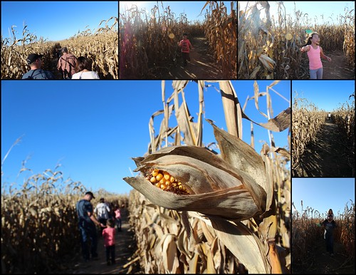 Corn Maze Collage