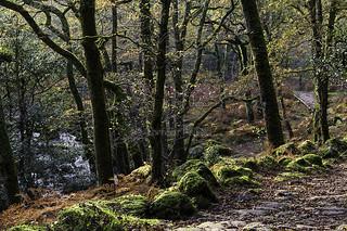 Autumn in Dewerstone Woods